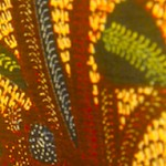 熱帯植物柄の綿更紗